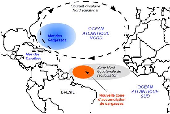 La zone d'accumulation des sargasses en Atlantique se trouve essentiellement au nord du Brésil et au large des États-Unis